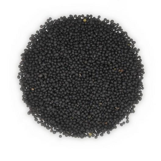 검정콩(흑두)